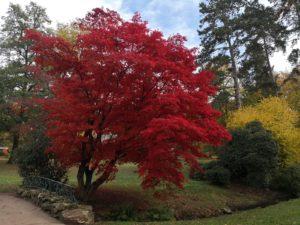 Herbstimpressionen von N. Koeller