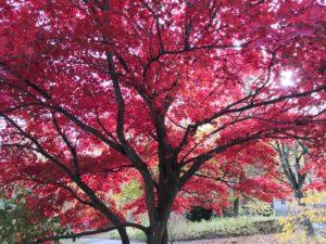 Herbstimpressionen 2